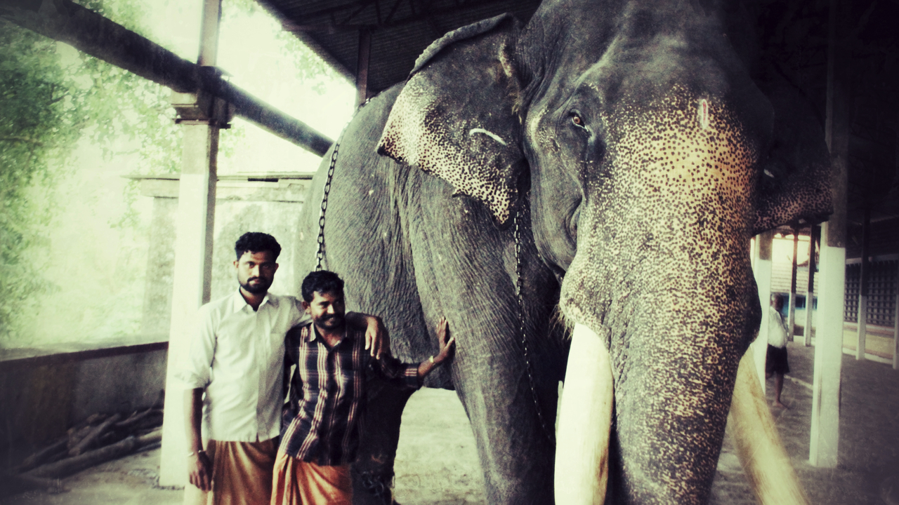 Kerala_Elephant